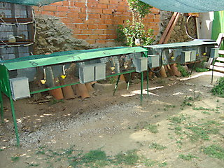 PADRES DE LA CAMADA DEL 25-05-2009